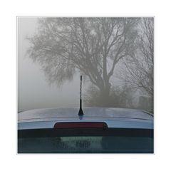 ... early morning fog