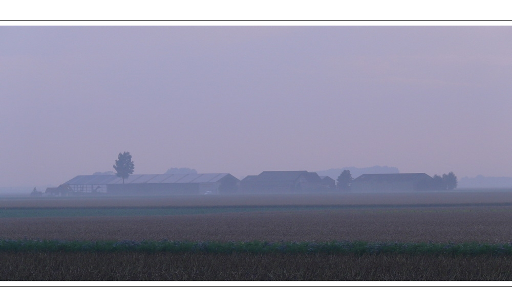 Early morning fog at Dawn an 10.07.07