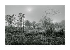 [ early morning fog ] II