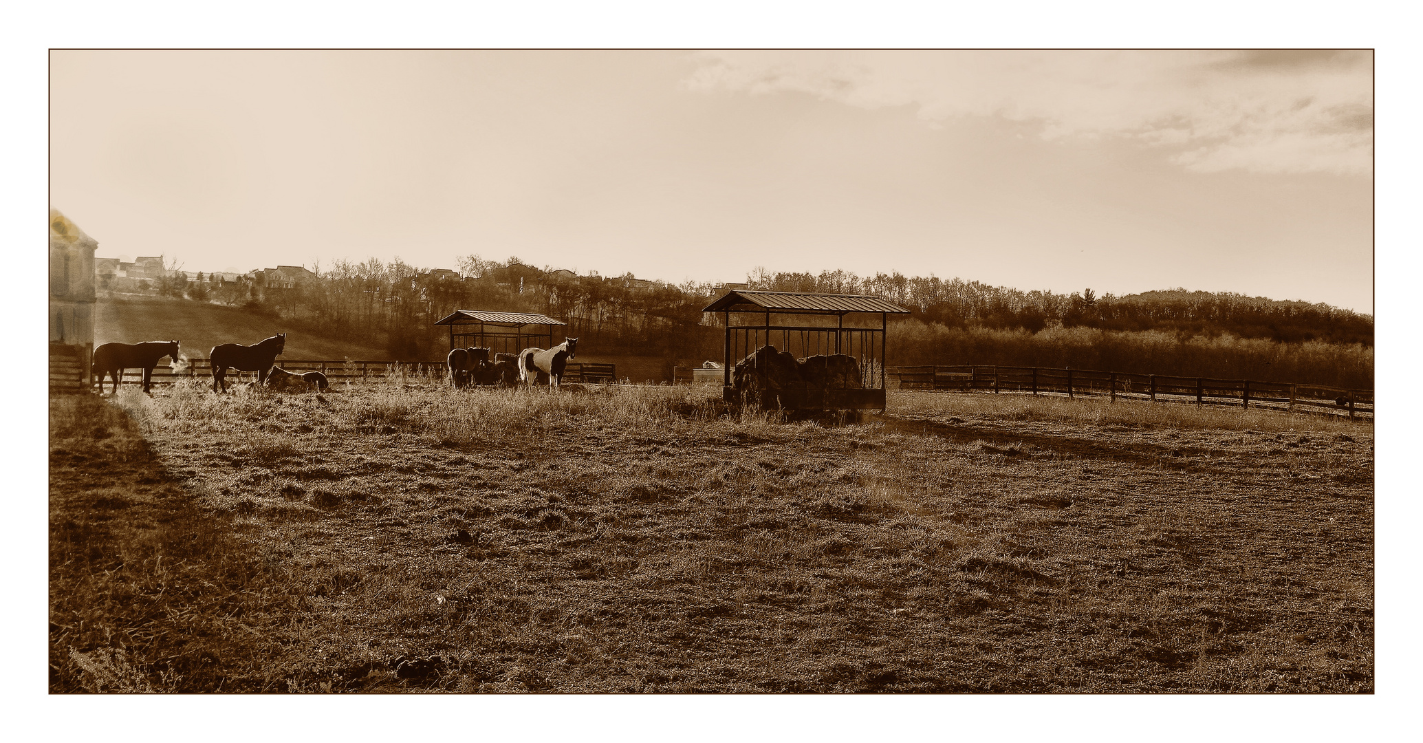 Early morning out by the Horse Farm
