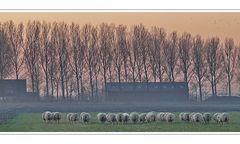 early Sunday morning facing south (18.11.2007 at 08:16:03)