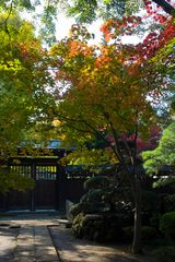 Eary fall in Japan