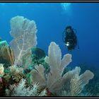 easy Dive Karibik