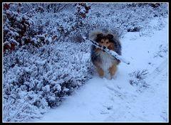 Easy im Schnee 1