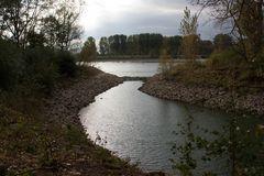 Ebbe im Rhein (2)