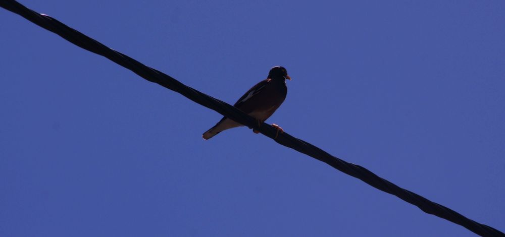 E....Birdy