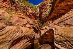 Echo Canyon, Zion NP, Utah, USA