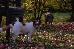 Echt???....alles deine Äpfel??