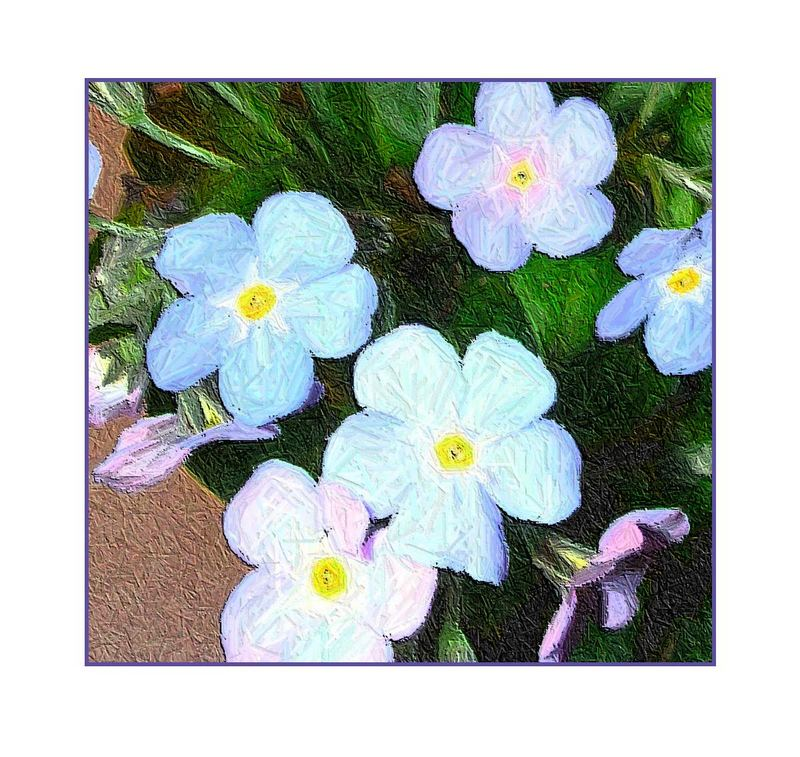 echte Blüten - *smile
