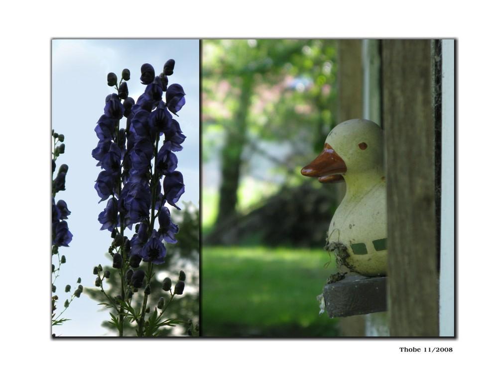 Echte Enten schwimmen . Echter Hut aus Eisen rostet