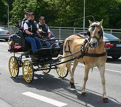 Echte Pferdestärken 06