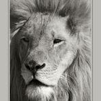 Echter König