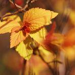 Eclosion printanière aux couleurs d'automne....