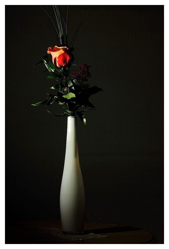 Ecuador-Rose
