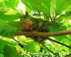Ecureuil du Mexique