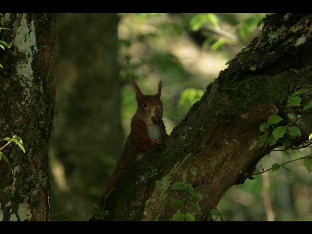 écureuil2