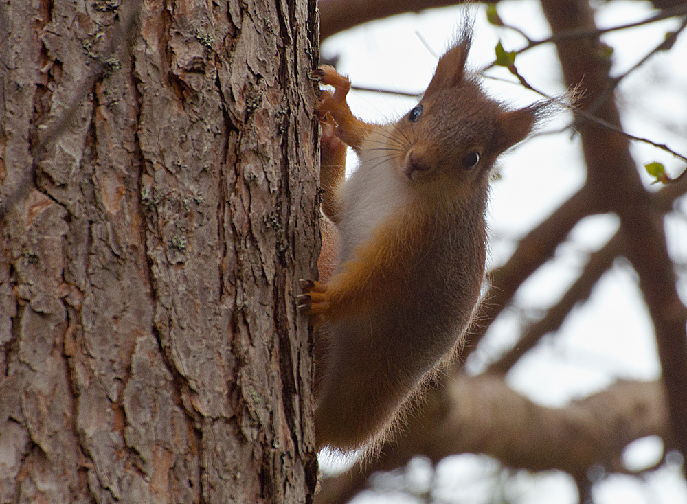 Eddie Tthe Squirrel visiting