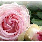 Eden-Rose...