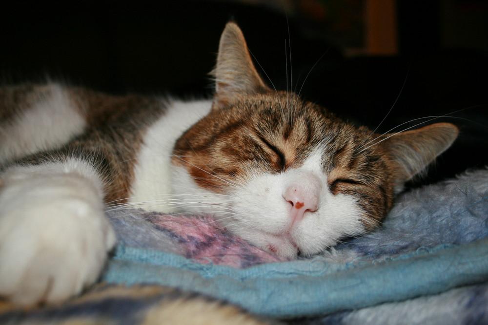 Edwina im Tiefschlaf