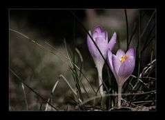 EEEEndlich... der Frühling kommt ...
