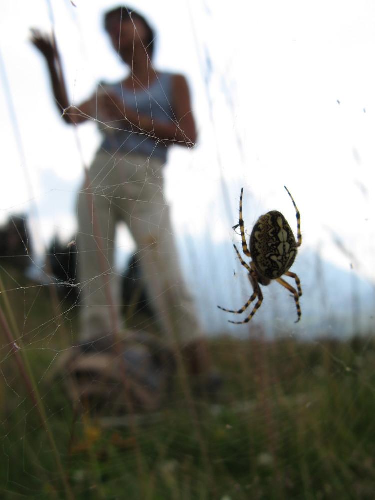 Effet avec une araignée et sa toile...