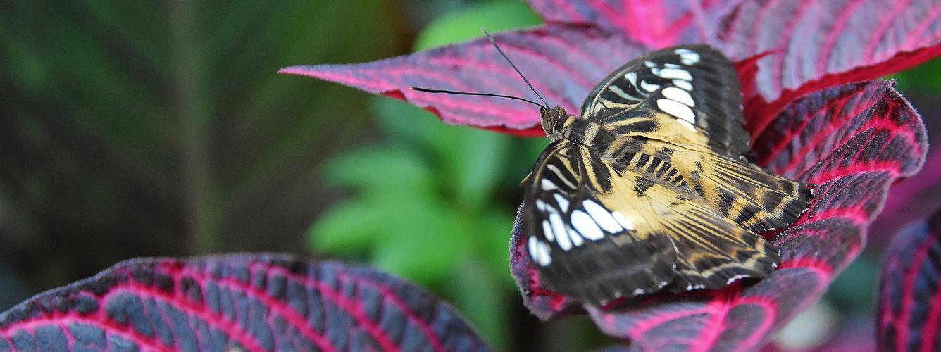 Effet papillon!