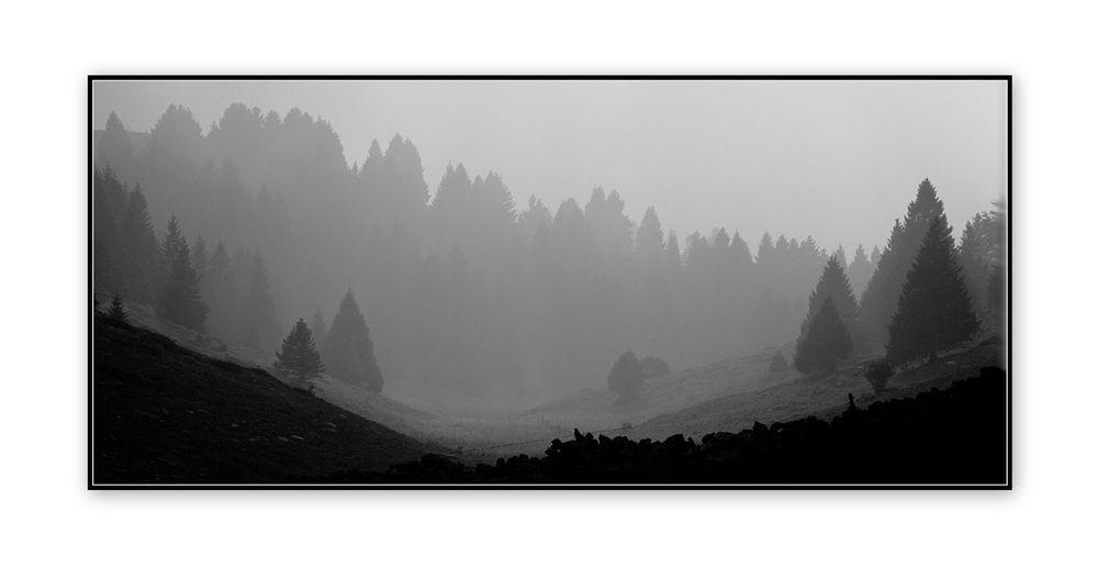 Effetto.nebbia!...