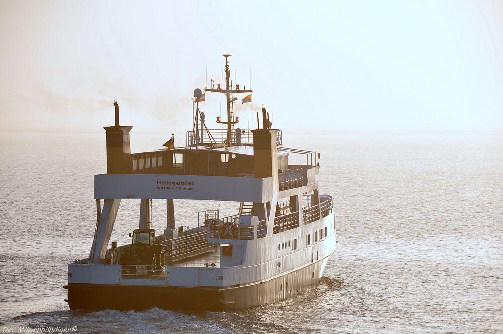 Egal,Nebel oder nicht ,Krischan fährt zum Seegras mähen