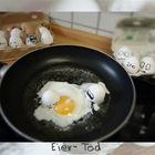 egg life 6