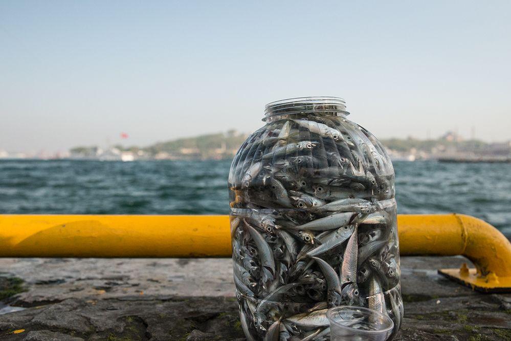 ehem. Bosporusfische