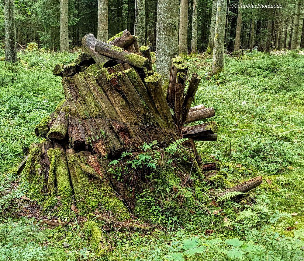 Ehemaliger Köhlermeiler (Nähe  Neuhaushütte)