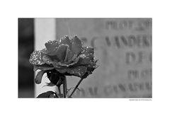 Ehrenfriedhof...