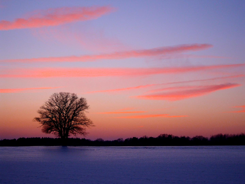 Eiche im Sonnenuntergang
