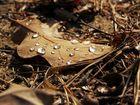 Eichenblatt auf sonniger Lichtung