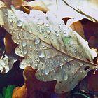 Eichenblatt mit Tautropfen