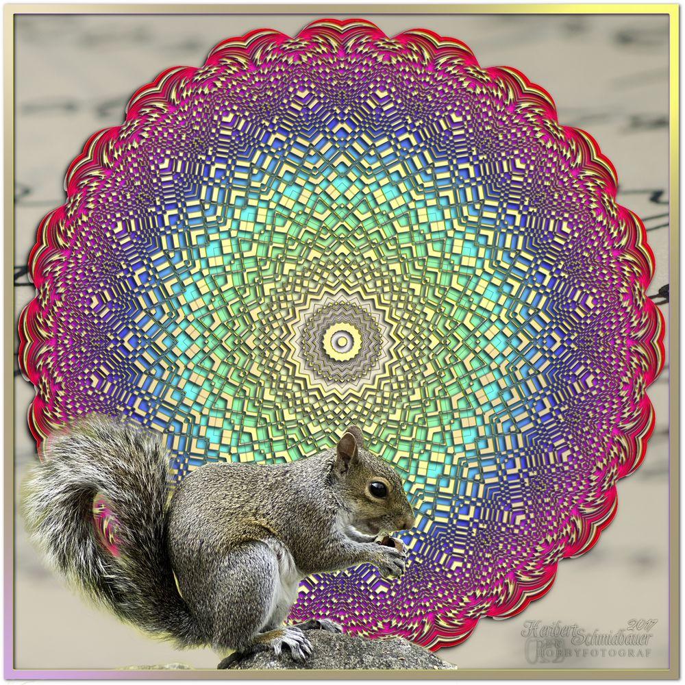 »Eichhörnchen« (01)