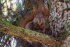 Eichhörnchen 1