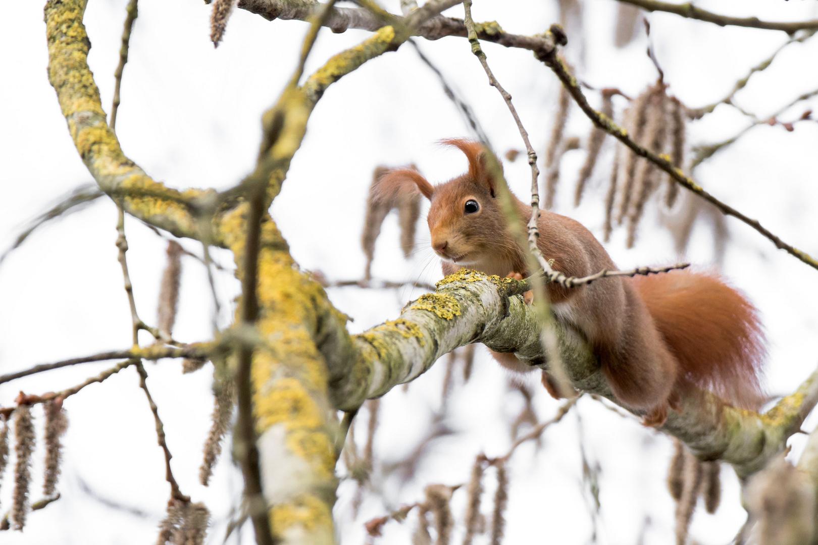 eichhörnchen foto & bild   natur bilder auf fotocommunity