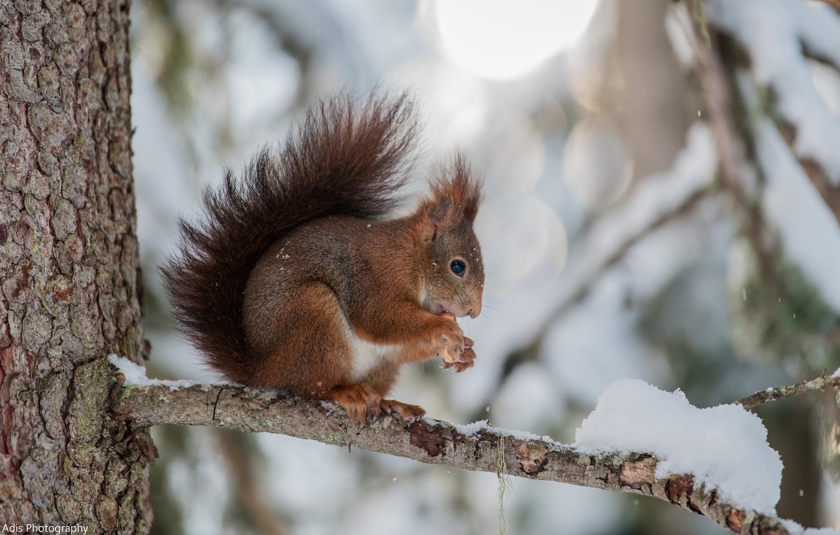 eichhörnchen foto  bild  natur tiere wildlife bilder