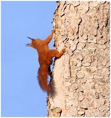 Eichhörnchen...