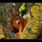 Eichhörnchen #3