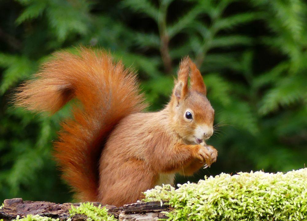 eichhörnchen foto  bild  eichhörnchen frühling natur