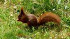 Eichhörnchen 6