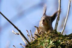 Eichhörnchen....