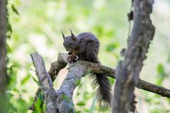 Eichhörnchen am Abendessen