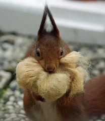 Eichhörnchen beim Bettenmachen (3)
