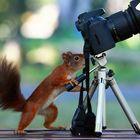 Eichhörnchen beim Fotografieren