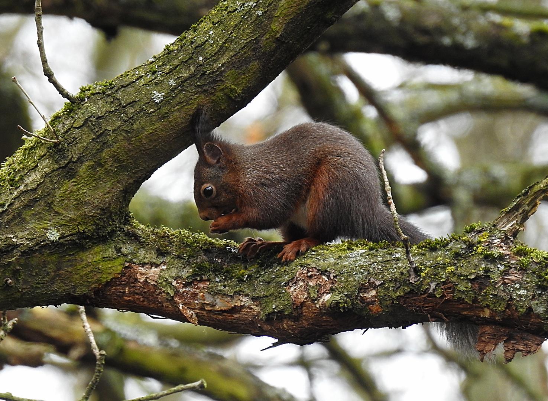 """""""eichhörnchen"""" foto & bild   tiere, wildlife, säugetiere"""