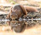 ...Eichhörnchen...