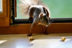 Eichhörnchen..